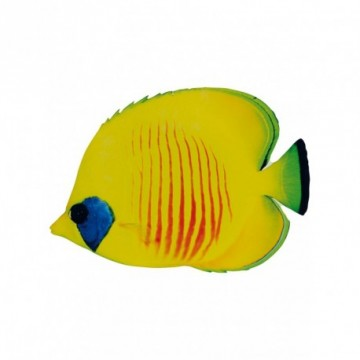 "Tropical fish ""butterfly fish"""